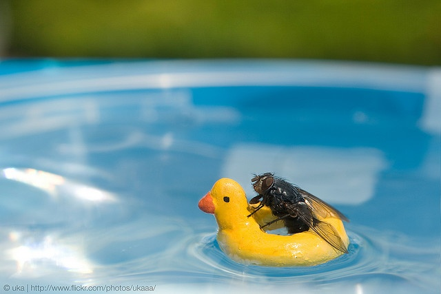 minor paddle by ukaaa, via flickrPaddles, Day Off, Fly, Macro Photography, Boats, Bath, Funny Images, Nicholas Hendrickx, Rubber Ducks