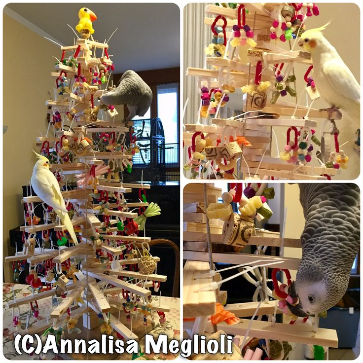 Christmas tree just for parrots! Made with wood and decorated with many toys and cool stuff to chew on every branch!