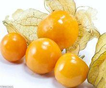 Pineapple Ground Cherries Mollys Organic Heirloom Seeds RARE northeast China Cuckoo fruit(China (Mainland))