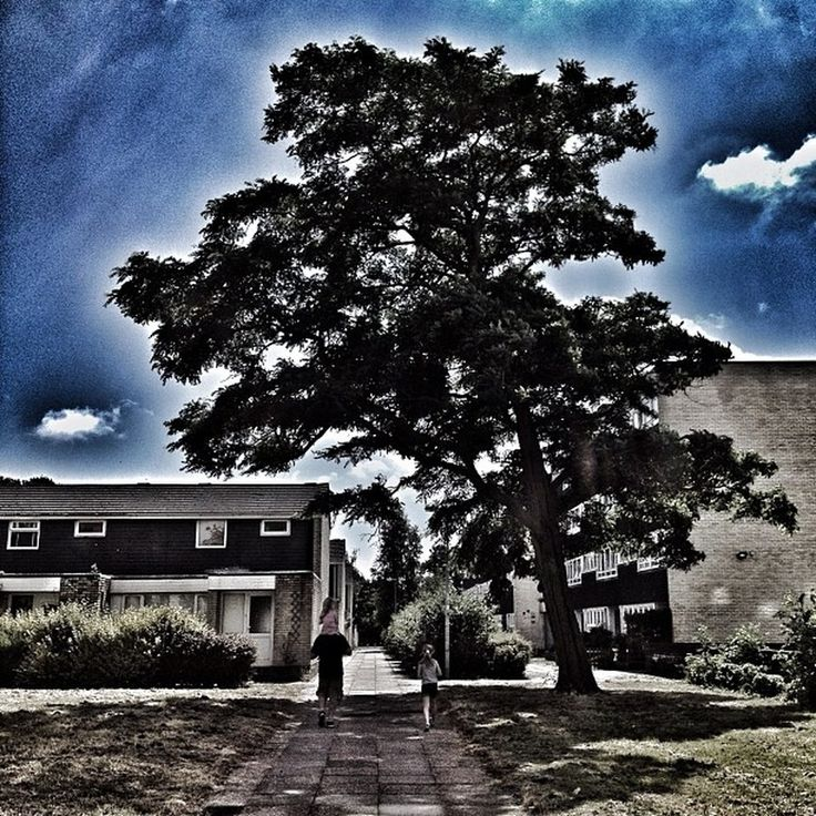 "Photo ""#family#cloudybluesky#cloudporn#skyporn#nature#natureporn#tree#instam"" by noo_noo76"