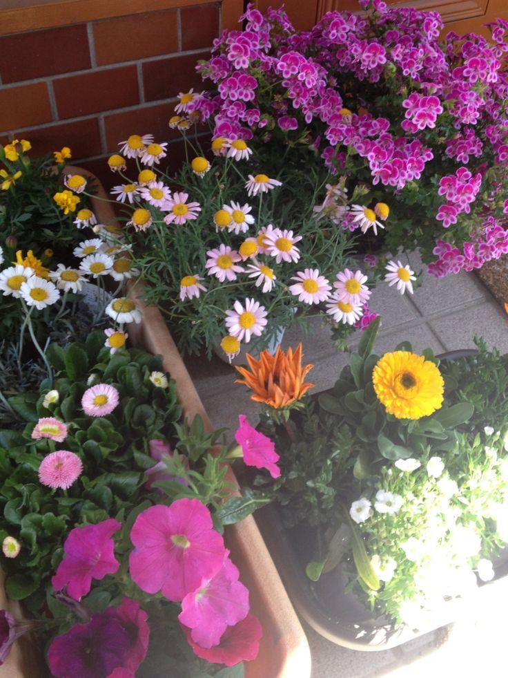 春の花購入
