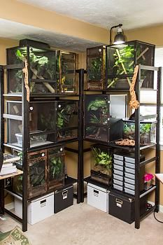 41 Best Images About Reptile Cage On Pinterest Crested