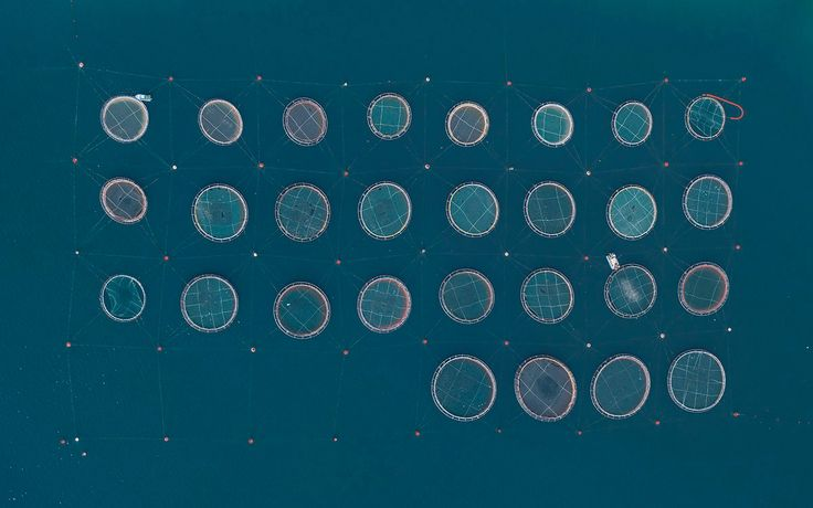 Flying in a helicopter high above the coast of Greece, German photographer Bernhard Lang captures unusual networks of circular fish farms. The strange, ovoid enclosures appear like abstract geometric designs, hardly related to the thriving ecosystems of fish that lay just below the surface. Aquacult