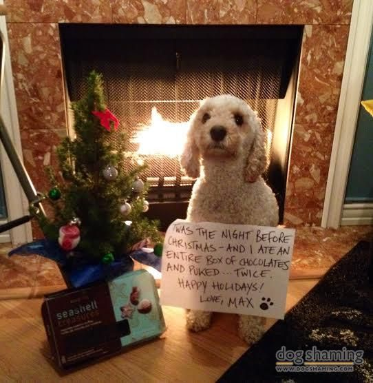 227 Best Images About Dog Shame On Pinterest Dog Tumblr