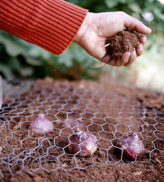 This is an ingenious idea! This was my first year of planting bulbs and I definitely would have benefited from implementing this strategy.