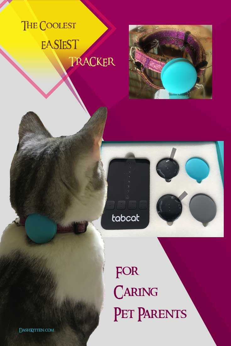 The most fascinating kitty tracker on the market today.  We show you how easy it is to use, and present our comprehensive review and fun movie of this terrific tracker.   Tracking technology is nowhere near as weighty and scary as you might think.....