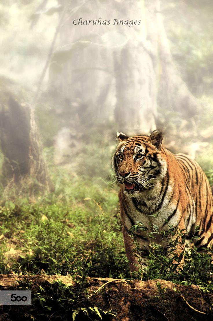 white tiger tantra torrent