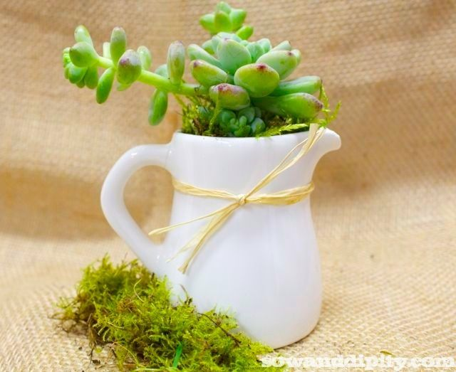 creamer with succulent