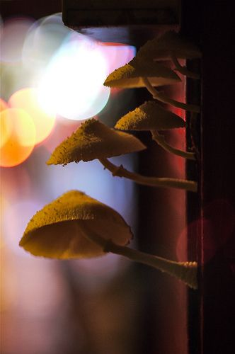 Mushrooms, Light