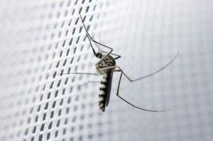 Fliegengitter, Insektenschutzgitter & Gaze reinigen und putzen