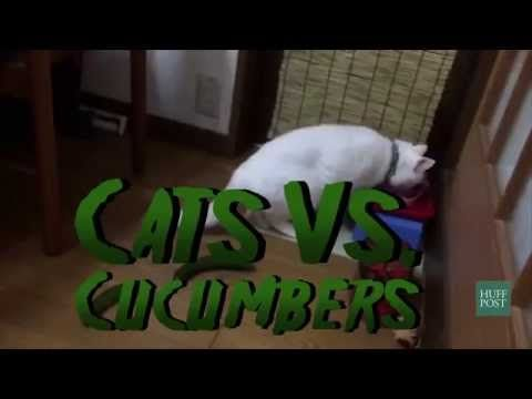 Cats VS Cucumbers - YouTube