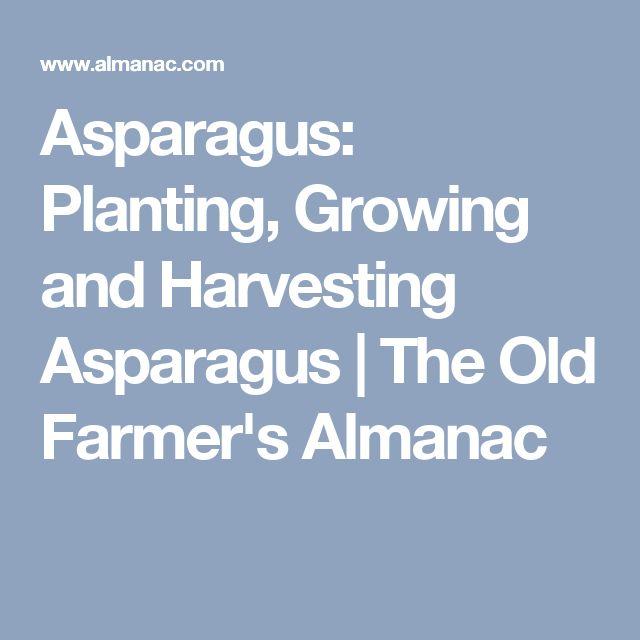 Asparagus: Planting, Growing and Harvesting Asparagus | The Old Farmer's Almanac