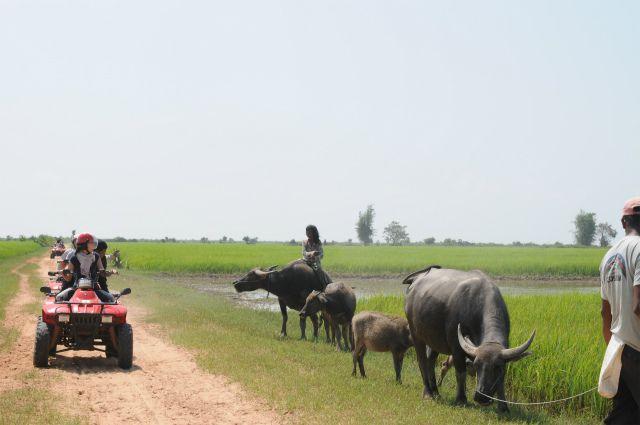 クアド アドベンチャー カンボジア