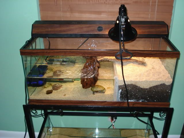 Turtle tank I ? turtles Pinterest Ideas, Turtle tanks and ...