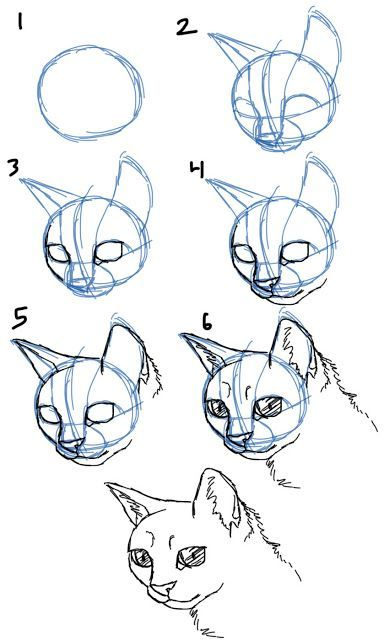How to Draw Cat Faces/Heads: