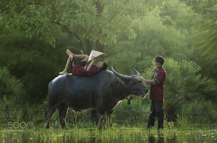 Farther and son - Thai farmer and son is happiness in evening before cameback home
