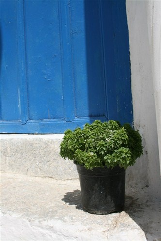 Island door painted in Aegean blue and a pot with a basil plant