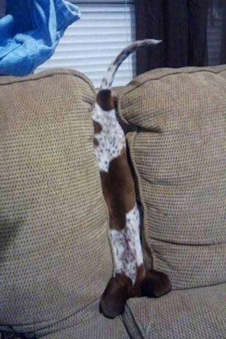 Animals vs Furniture