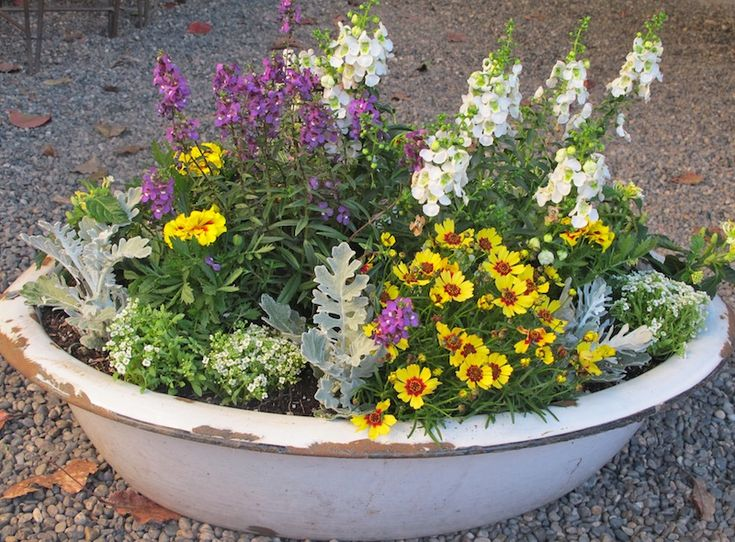 Container Garden in a Vintage Enamelware Tub
