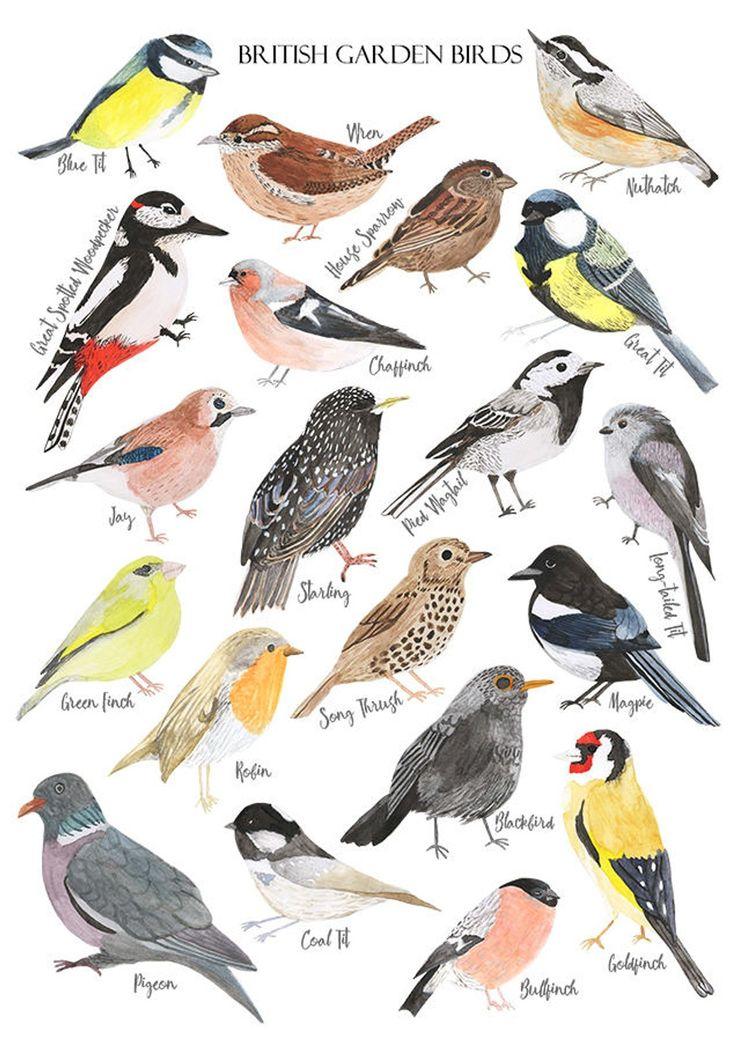 British Birds Print – Watercolour Artwork Print – British Nature Print – Fowl Illustration – Fowl Poster – Watercolour Birds – Wildlife Print