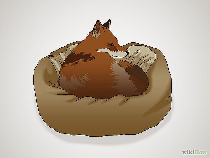 so i really want a pet fox and this is how to take care of it