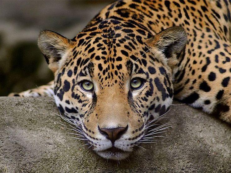 Satkosia Gorge Wildlife Sanctuary - in Odisha, India