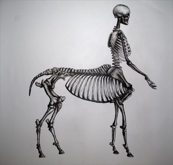 centaur | Centaur Skeleton by Joe Friedman