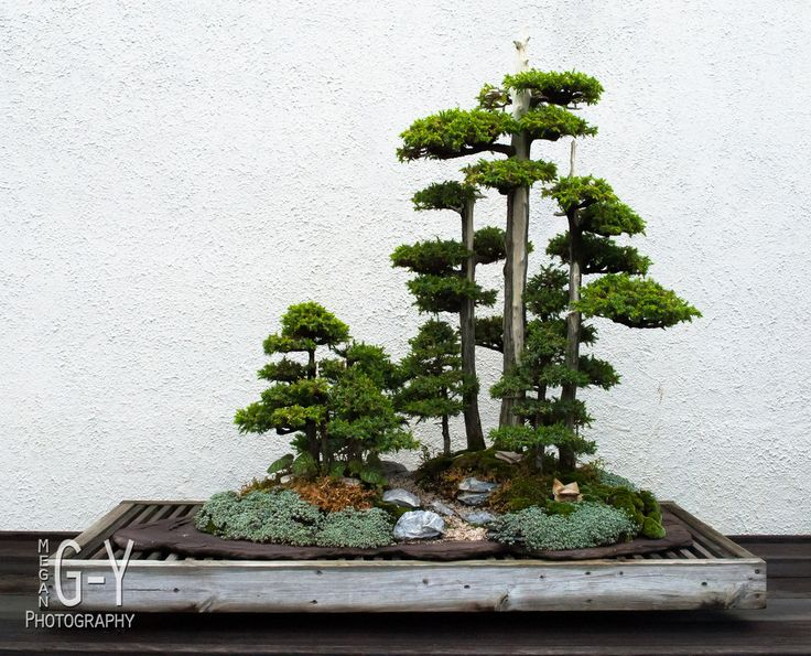 Best DC National Bonsai Penjing Museum Images On - Us national arboretum google maps