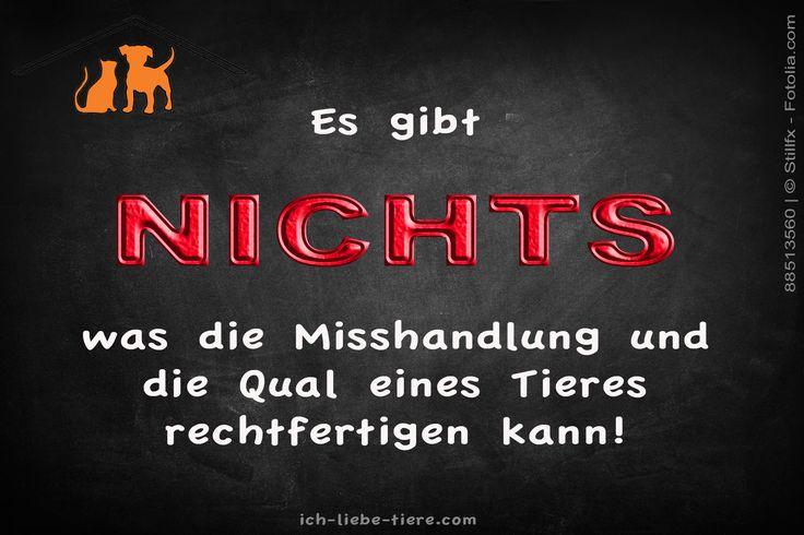 Es gibt NICHTS, was die Misshandlung und die Qual eines Tieres rechtfertigen kann! http://www.ich-liebe-tiere.com/
