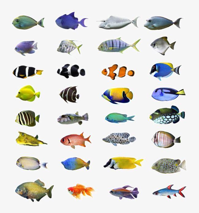أسماك استوائية لون الأسماك البحرية صور الأسماك الملونة السمك السمك السمك سمكة جميلة الحياة البحرية Tropical Fish Fish Art Colorful Fish