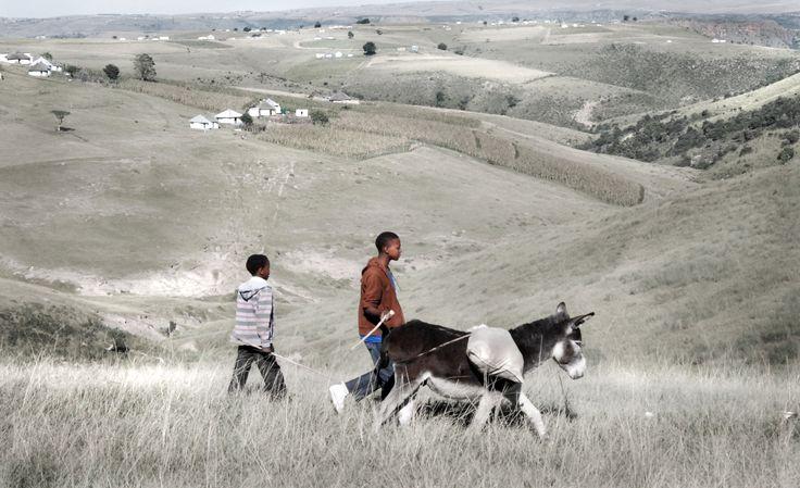 Rural Xhosa herdboys in the Transkei
