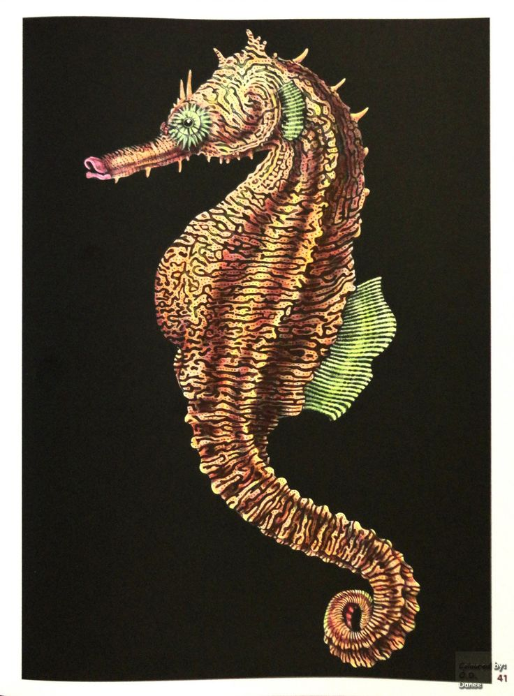 Tim Jeffs -  Intricate Ink Animals in Details volume 1   Seahorse Coloured with Tesco Go Create Bright pencils