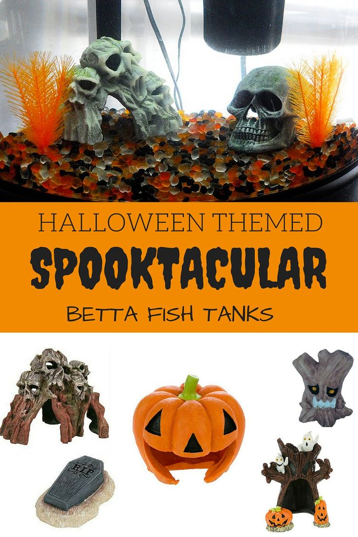Spookify your betta fish tank with all of these ideas!