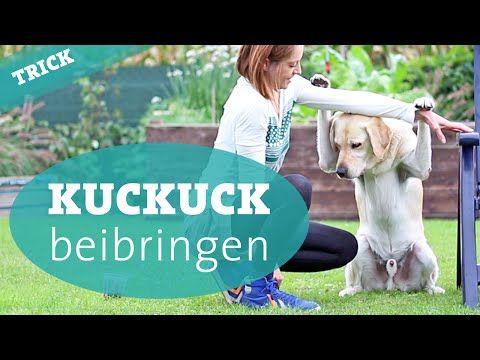 Hundetrick Kuckuck beibringen – Hund Tricks beibringen Hundekanal - YouTube