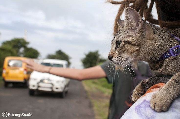 Hitchhiking with a cat (the practical side)
