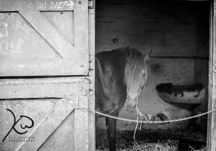 Horse in stable Monochrome #kylewoodenbergphotography #lightroom