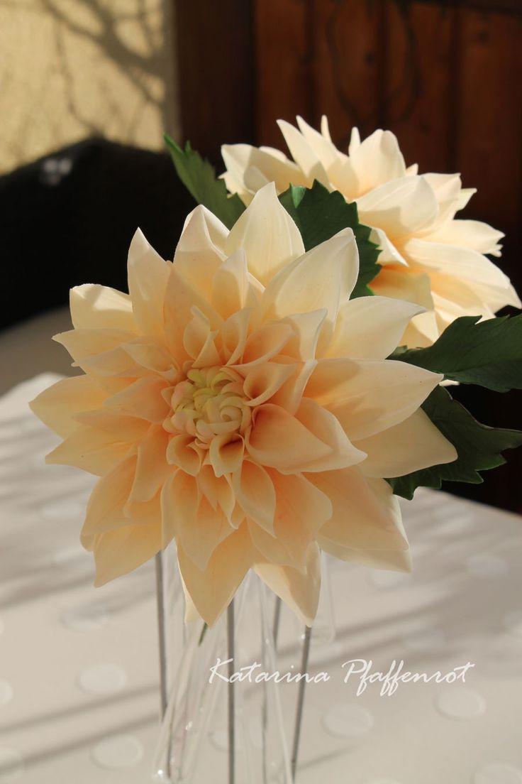 best dahlias images on pinterest dahlia dahlias and dahlia flower