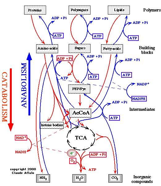 www.biochemic-remedies.com.au pdf