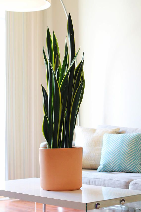 This 10 Inch Cylinder Pot Is Sure To Give A Pop To Your Indoor