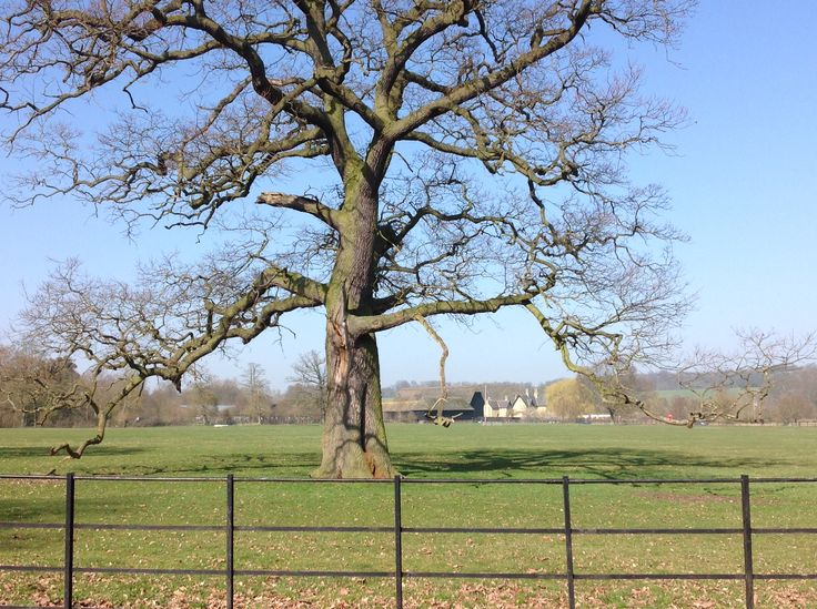 Wimpole National Trust (from my car) - Julie Sant 2013