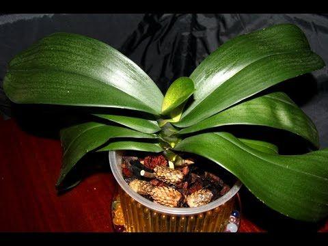 Выжить после.../Бывшая реанимашка, орхидея - YouTube