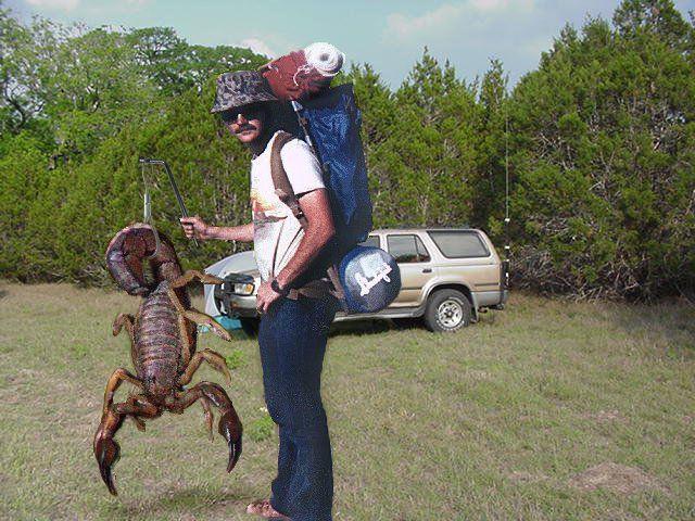 Biggest scorpion in the world - photo#54