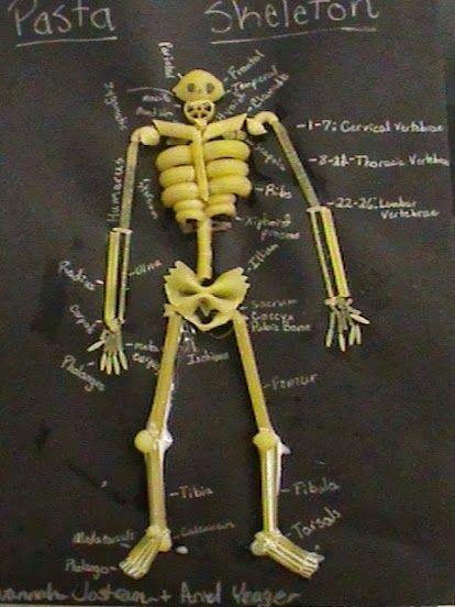 esqueleto de pasta