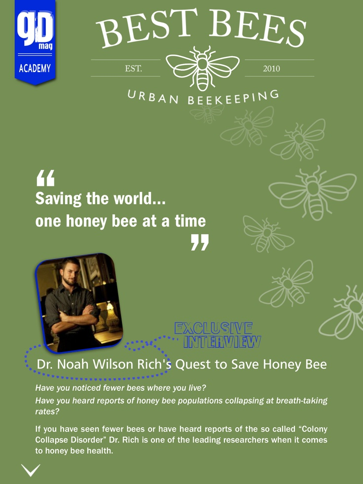Bringing life back to the city... The Bee Project... What 'Best Bees' said to us