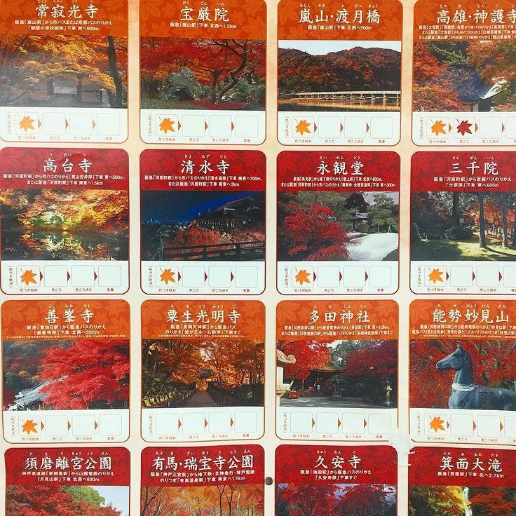 Когда в Киото начинается кленовый сезон на вокзалах и станциях появляются вот такие постеры и табло где каждое утро служащие отмечают степень краснения листвы Момидзи. Приезжие сразу могут сориентироваться в списке местных садов и достопримечательностей чтобы наверняка увидеть лучшие на этот момент картины осеннего Киото. В сезон сакуры аналогично предлагается информация о цветении японской вишни. Туры и экскурсии по Японии с Midokoro.JP #японскиесезоны #момидзи #клён #клены #сакура #листья…