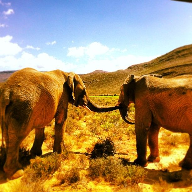Aquila Private Game Reserve in Touwsrivier, Western Cape