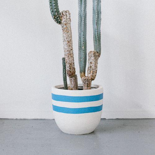 Pop & Scott 'Milk Bottle' Pot  Image by Jessica Tremp