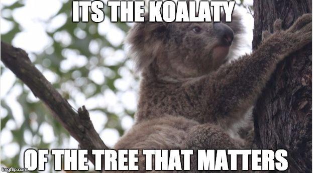 Koala Memes by yarub