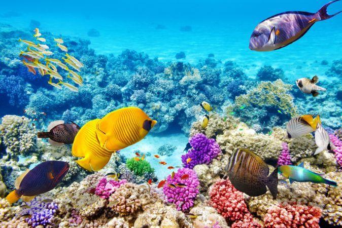 A Nagy Korallzátony, Ausztrália - A Nagy Korallzátony a világ legnagyobb korallzátonyainak gyűjteménye, amely több mint 1400 mérföldet ölel át. Annyira nagy, hogy az űrből is látható, de nemcsak a mérete említésre méltó: ha alámerülsz a habokban, és megnézed, mit rejt a tenger feneke, páratlan vizuális élményben lesz részed.