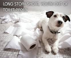 Image result for jack russell puppies  meme